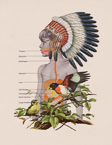 Indian_bird